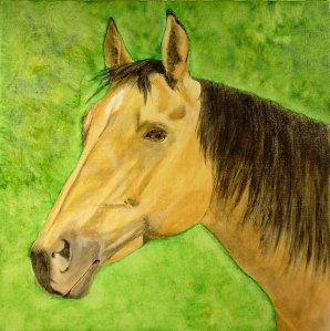 An energetic little buckskin mare who lives down the aisle from Billy. They don't get along, but she does make for a nice portrait.