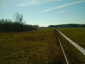 Pasture at Willow Tree on a nice sunny November day!