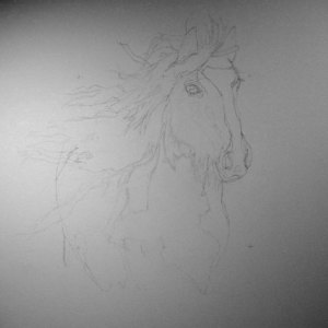 Gypsy Vanner pencil drawing