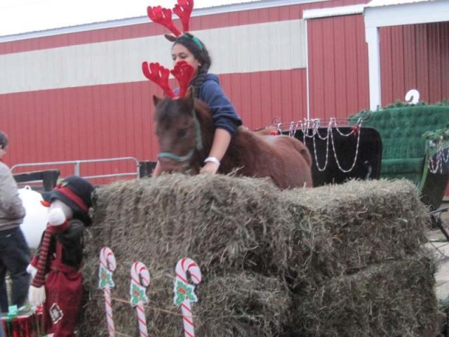 Paige with Jimmy the bratty pony. He had no problem jumping up on the float platform and digging into the hay. The sleigh is behind him.