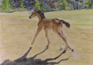 When will I run out of photos of Reva? Probably about the time the next foal comes along.