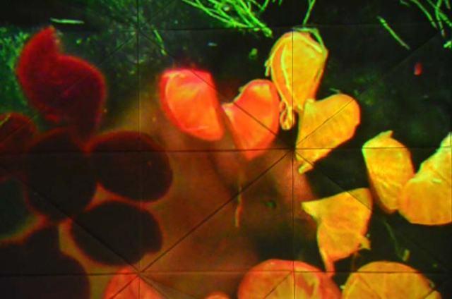 Here comes some technicolor digital art--no wait, it's just gorgeous food!