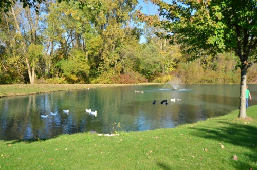 Ducks and geese welcome (well, sort of) visitors to the Michigan City facility.