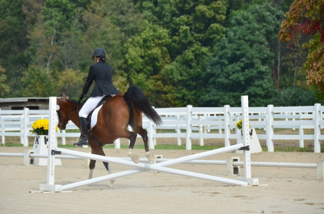 Just like last year, the show featured a Prix Caprilli class--dressage jumping!