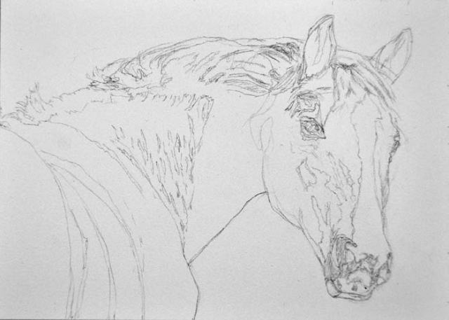 Pencil drawing on Aquabord™ of Luke, a Hanoverian gelding at Willow Tree