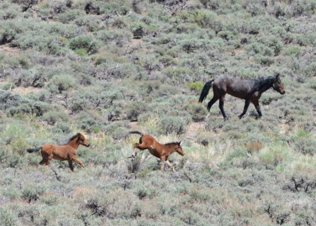 2-2-foals