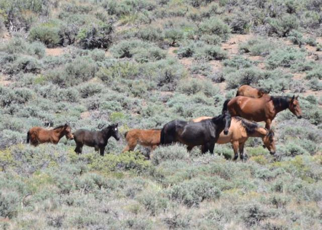 Lots of foals in the springtime!