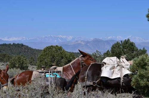 Mules and mountains.