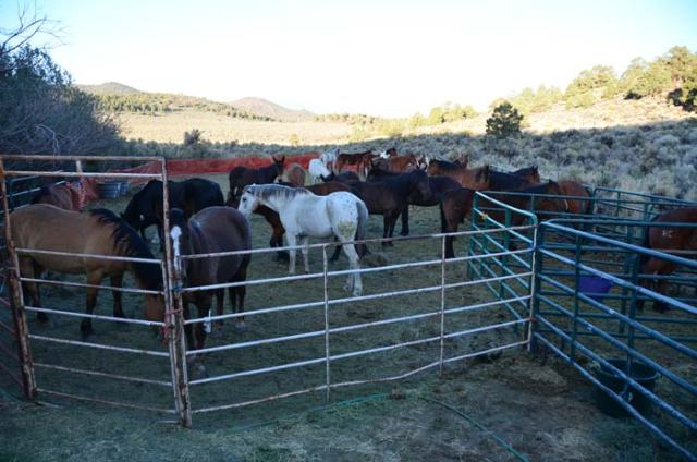 Our horses wait for breakfast as the day breaks.