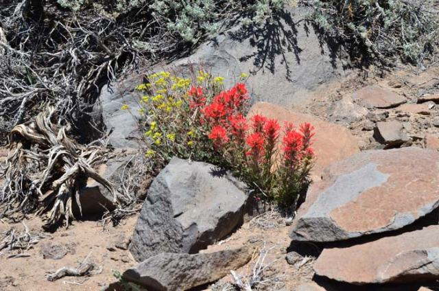 Yellow and red wildflowers at one of our highest elevations.