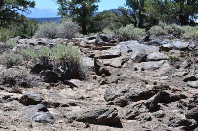 """What the major portion of the """"trail"""" looked like most of the time. Lots of rocks, not a lot of dirt."""