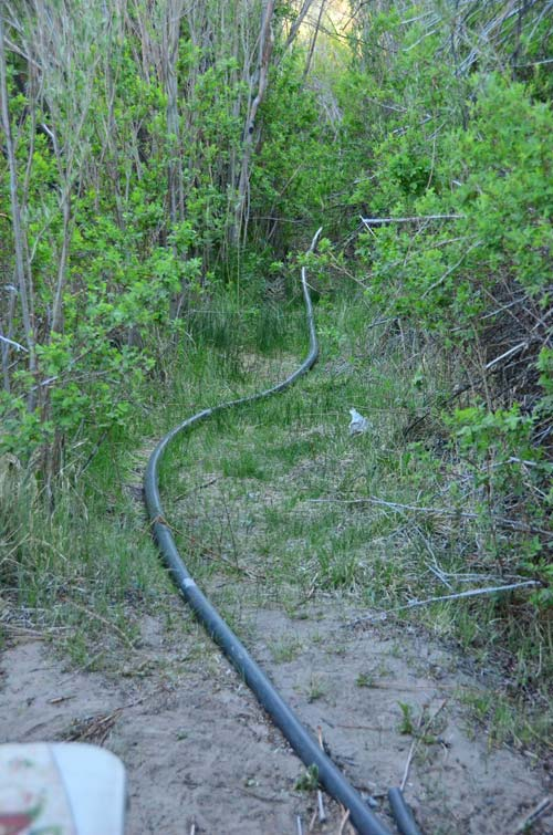 "The ""water main"" for our camp--from a stream somewhere up the hill!"