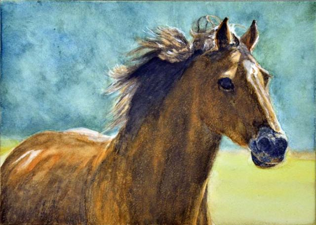 Here's the portrait of Sydney racing to meet up with her herd mates.