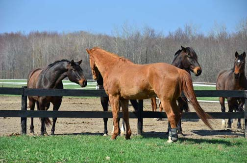 Mr. Studly found real mares to impress at Willow Tree.