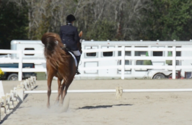 """Charm's signature """"tail swish"""" transition from trot to canter."""