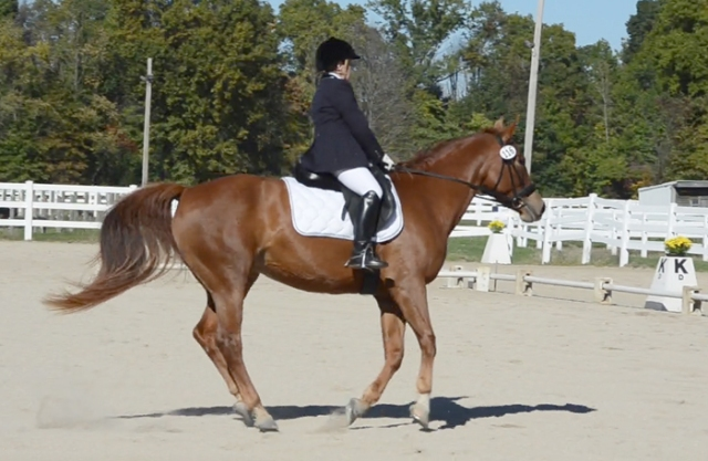 Very nice, light canter. Just floating along, which is what she's supposed to do.