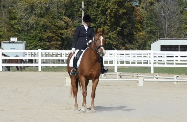 Nice square halt. All four legs directly under the horse, top of the head the highest point, and looking alert.