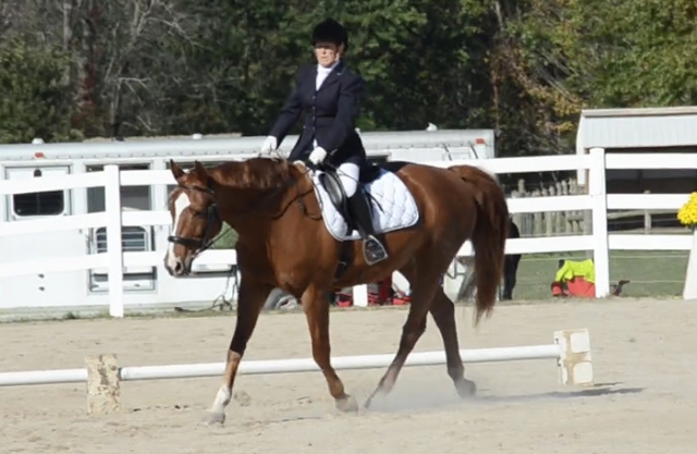 """This is the """"stretchy trot circle"""" where the horse is supposed to reach downward and out. Charm's head should really be down somewhere near the level of her knees. Oh well."""