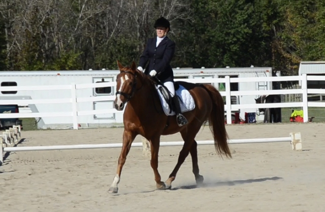 Nice reach under herself with the hind legs in the trot.