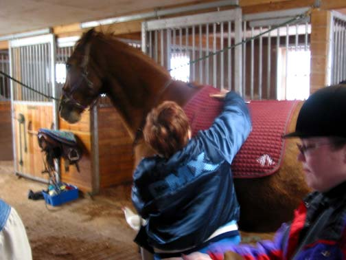 My first encounter with Billy. He did not like being groomed...or tacked up!