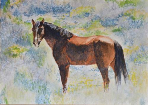 """McBride, the """"loner"""" stallion from my mustang trip."""