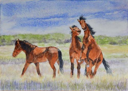 """Practice"". Bachelor stallions sharpening their fighting skills."